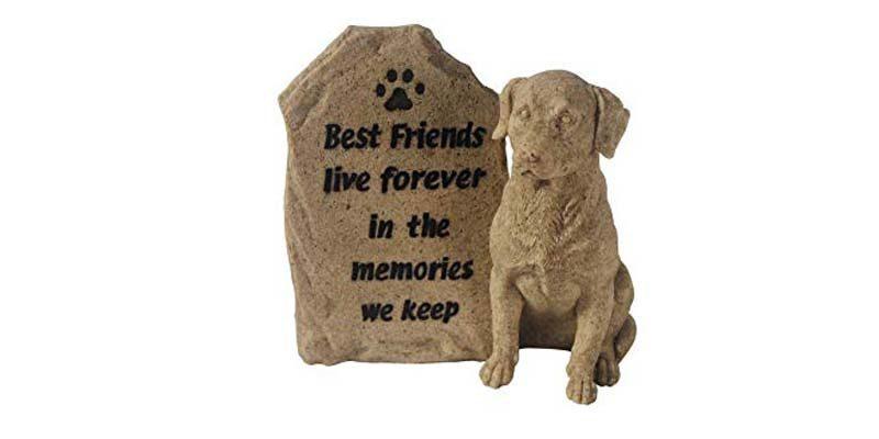 Zakaj-psi-umirajo-sami