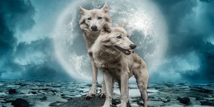Zgodba o volkovih